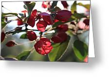 Spring Crabapple Blossom Greeting Card