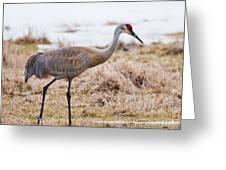 Spring Crane Greeting Card