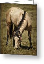 Spring Creek Basin Wild Horse Grazing Greeting Card