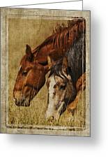Spring Creek Basin Wild Horses Greeting Card