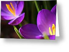 Spring Crocus Pair  Greeting Card