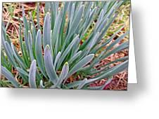 Spring Daffodil Plant Greeting Card