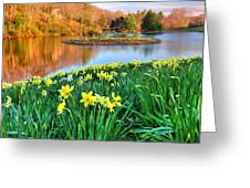 Spring Daffodils At Laurel Ridge-connecticut  Greeting Card by Thomas Schoeller