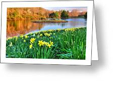Spring Daffodils At Laurel Ridge-connecticut  Greeting Card