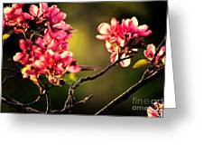 Spring Dance Greeting Card