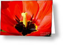 Red Tulip In Spring Greeting Card