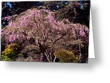 Spring Day In Park Greeting Card