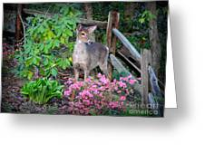 Spring Deer Greeting Card by Crystal Joy Photography