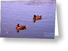 Spring Ducks Greeting Card