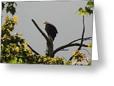 Spring Eagle I Greeting Card