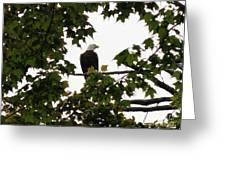 Spring Eagle Vi Greeting Card