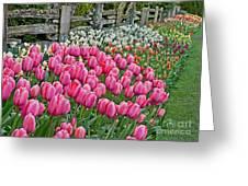 Spring Fence Landscape Art Prints Greeting Card