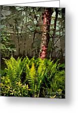 Spring Ferns Of The Blue Ridge 3 Ap Greeting Card