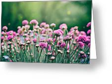 Spring Floral Background Greeting Card