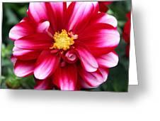 Spring Flower 1 Greeting Card
