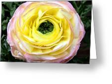 Spring Flower 3 Greeting Card