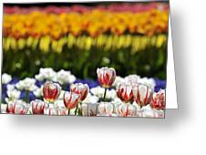 Spring Flowers 11 Greeting Card