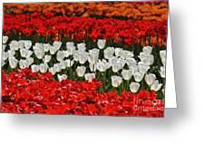 Spring Flowers 16 Greeting Card