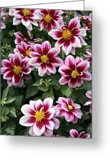 Spring Flowers 4 Greeting Card