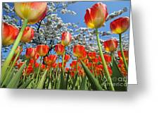 Spring Flowers 7 Greeting Card