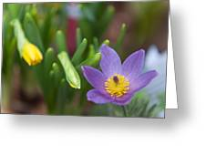 Spring Flowers. Flowers Of Holland Greeting Card