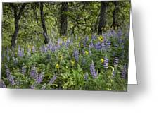 Spring Flowers In The Columbia Gorge Greeting Card