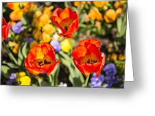 Spring Flowers No. 4 Greeting Card