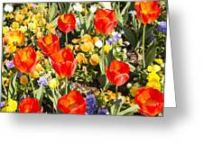 Spring Flowers No. 5 Greeting Card