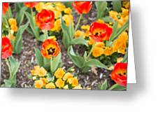 Spring Flowers No. 6 Greeting Card