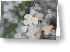 Spring Focus Greeting Card