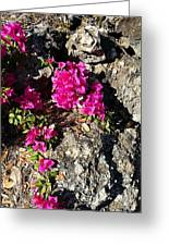 Spring From Rocks Greeting Card