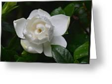 Spring Gardenia 2013 Greeting Card