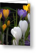 Spring Glow Greeting Card