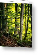 Spring Green Vertical Forest  Greeting Card