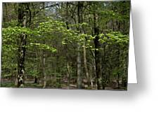 Spring Greenery Greeting Card