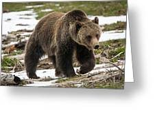 Spring Grizzly Bear Greeting Card