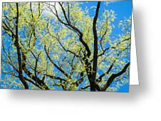 Spring Has Come - Featured 3 Greeting Card