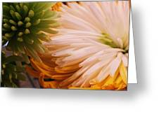 Spring Has Sprung II Greeting Card