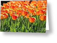 Spring In Beantown Greeting Card