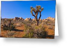 Spring In Joshua Tree National Park Greeting Card