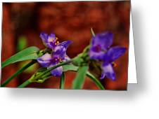 Spring In Medicine Park Greeting Card