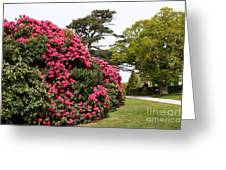 Spring In Muckross Garden - Ireland Greeting Card
