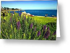 Spring In Pacific Grove Ca Two Greeting Card