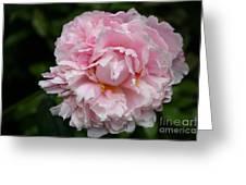 Spring In Pink Greeting Card
