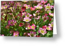 Spring In Pink Greeting Card