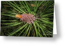 Spring In The Pines Greeting Card by The Stone Age