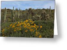 Spring In The Superstition Wilderness Greeting Card