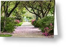 Spring In Washington Dc Greeting Card