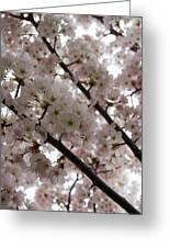 Spring Is Beautiful - A Cloud Of Pastel Pink Blossoms Greeting Card