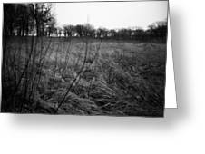 Spring Is Near Holga Photography Greeting Card